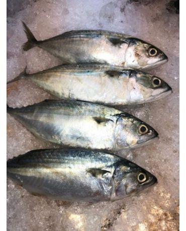 Kembong Fish/ Ikan Kembong Seekor (2kg/pkt)